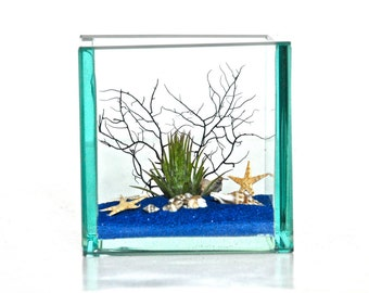 Air Plant Sea Terrarium, Beach Terrarium, Ocean Theme Decor, Beach Theme Decor, Starfish Ocean Terrarium, Sea Theme Decor, Sea Fan Decor