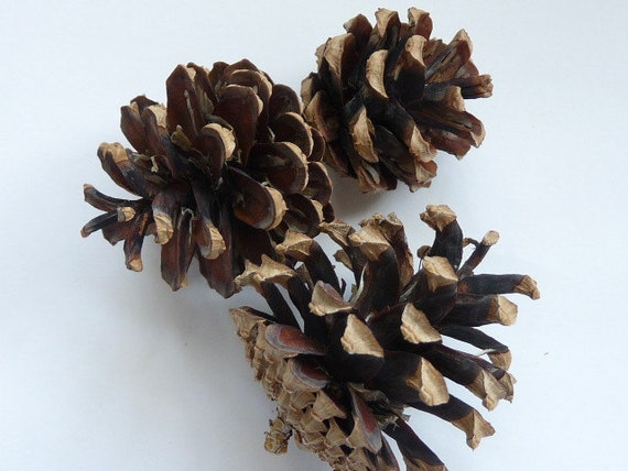 Small pine cones natural decor and crafts for Small pine cone crafts