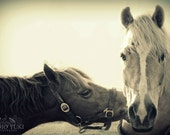 Horse Photo, Kissing Animals, Whimsical, Romantic, Rustic Winter, Couples Gift, Animal Photography, Equestrian Art, Valentines Gift, Horses