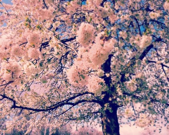 Nature Photography, Blossoming Tree, Spring Art, Soft Pink Flowers, Romantic, Dreamy, Sweet Pastel Nursery Decor, Tree Art - Sakura Summer