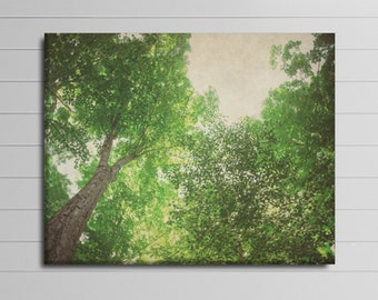 Large Tree Wall Art, Tree Canvas Wrap, Forest Canvas 30x40 Photography, Green Home Decor, Nature Picture