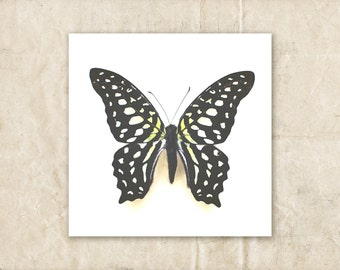 Butterfly Wall Art, Yellow and Black Photograph, Nature Photography, Still Life Picture, Polka Dot,  Spotted
