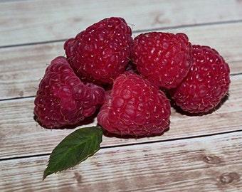 Red Raspberry Print Summer Fruit Photo Still Life Photography fpoe Kitchen Art Food Photography Anita Miller
