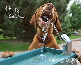 Vizsla Dog birthday cards - set of 4 cards