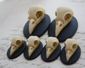 Bird Raven Crow Skull Cameo Cabs Resin Cabochon Taxidermy Animal Steampunk Gothic Goth Skull Black Ivory 40x30mm and 25x18mm 6 PIECES