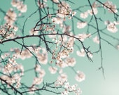Flower Photography - fine art photo flowering white crabapple tree mint green sky photograph wall art home decor
