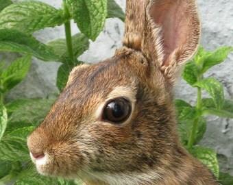 Bunny Photograph