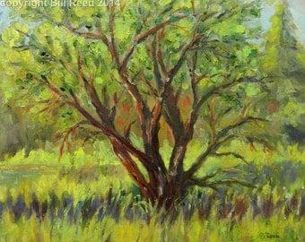 Wetland Tree - original landscape impressionist oil painting