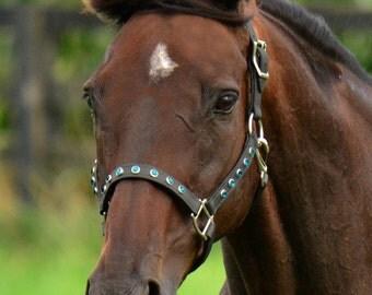 Horse Size**TURNOUT HALTER, Bling Beta Biothane