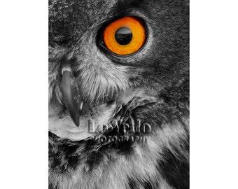Halloween Photo, Owl, Orange Eye, Wildlife Photography, Bird Photo, Nature Photography, Black and White, Eagle Owl