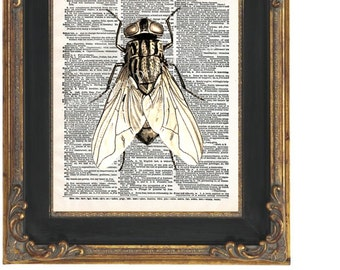 Fly Insect Art Print 8 x 10 Dictionary Page - Altered Art Collage - Goth - Oddity - Insect