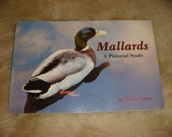 Mallards A Pictorial study Of Ducks 1988 Colored Photos of Ducks A Dynasty of Ducks