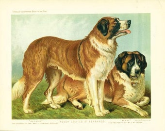 Rough coated ST BERNARDS Dogs ANTIQUE Chromolithograph Dog Print 1881 Vero Shaw Cassells Company Unique Birthday Christmas Thanksgiving gift