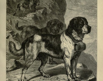 ST BERNARD Dogs ANTIQUE Chromolithograph Dog Print 1881 by Vero Shaw Cassells and Company Unique Birthday Christmas Thanksgiving gift