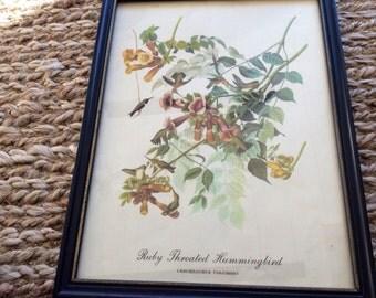 Vintage Bird Art- Hummingbird Botanical Art