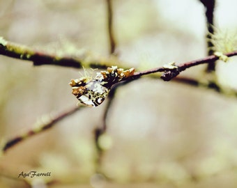 Raindrop on Twig, Woodland Decor, Green Wall Art, Nature Photography Print, Branch Art, Moss, Twig Art, Sage Green - Little Universe