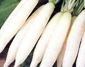 Tokinashi All Season Giant White Daikon Heirloom Radish Seeds Non GMO