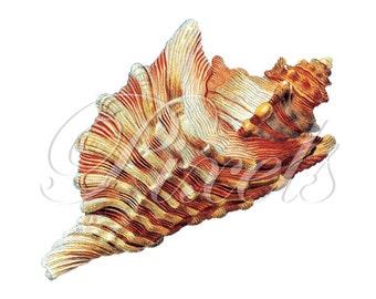 SEASHELL Instant Download Digital Downloads large digital image, orange stripes seashell clipart illustration 264
