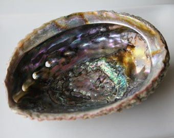 Abalone Shell Smudge Bowl / Cleansing / Energy tools/ Native Offering Bowl /Home Decor/ Boho / Altar Supply / Meditation/ New Age