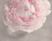 Flower Photograph, Pink Peony in Vase, Fine Art Photography Print, pastel pink, gray, floral, peony print, feminine, cottage chic wall art