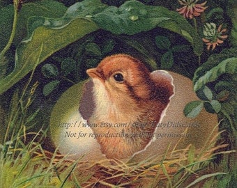 Chicken Fabric - Baby Chick Hatches from Egg - Repro Victorian Image