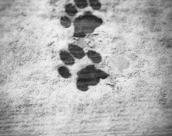 Kitty Feet - black & white photography - cat photography - cat art - upstate ny - photography print - wall art - EyeWasHere