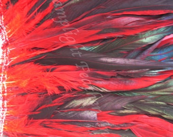 Approx 160 feathers, Ruby Red, 8-10 inch, Rooster coque, half-bronze tail feathers, bulk, wholesale, per strung foot