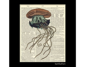 Jellyfish Illustration Dictionary Art Print Marine Art Print No.P270