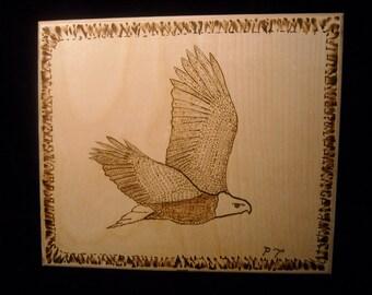 Bald Eagle Bald Eagle in Flight