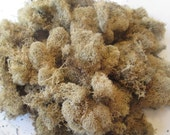 Natural Reindeer Moss, Terrariums, Fairy Gardens, Craft Projects, 4 oz