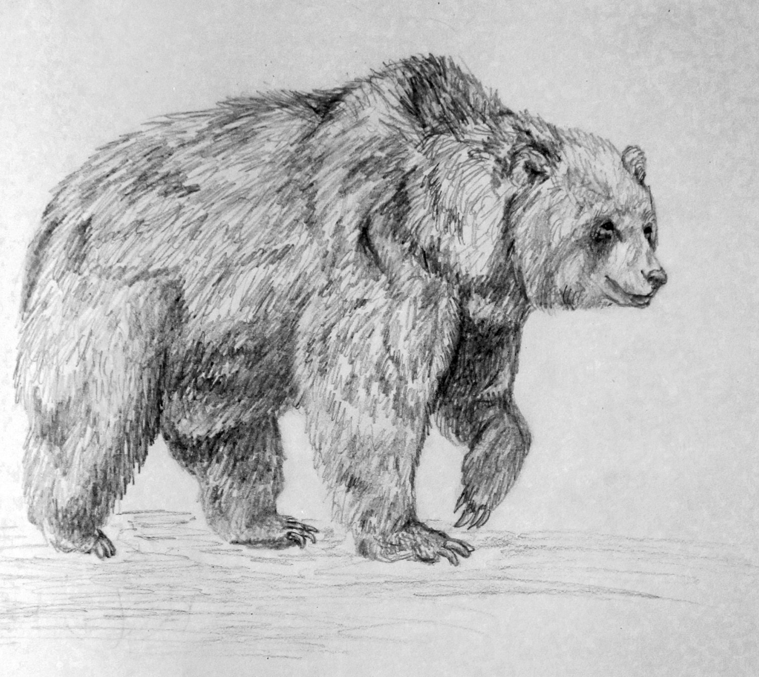 Items similar to Grizzly Bear Pencil Drawing Print on Etsy  Items similar t...