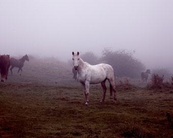 White Horse Photography, Purple and White, Fine Art, Animal Photography, Wildlife, Nature Photography, Horse Portrait, Wall Art, Home Decor