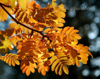 DIGITAL DOWNLOAD, Mountain Ash Leaves, Golden Photo, Nature, Fall Colours, Bokeh