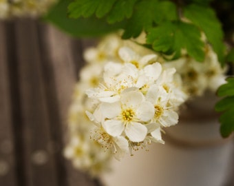 Floral photography print 'Blossom', Irish nature photography, white spring blossoms, spring flowers, hazy, dreamy, bokeh