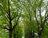 Photograph of Row of Trees, Leaf Photography, Tree Photography, Nature Photo, Leaf Art, Fine Art Photography, Tree Photo, Tree Art 4x6-20x30