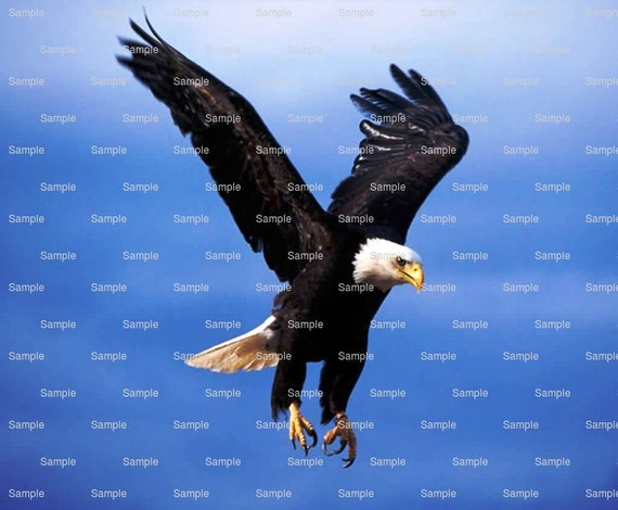 Bald Eagle Flying Birthday - Edible Cake and Cupcake Topper For Birthday's and Parties! - D4656