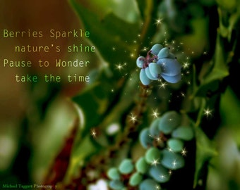 Berries Sparkle Amazing Pictures Photo Print by Michael Taggart Photography flower plant green blue