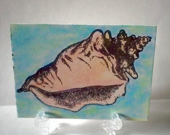 ACEO  Art Card- Conch Shell