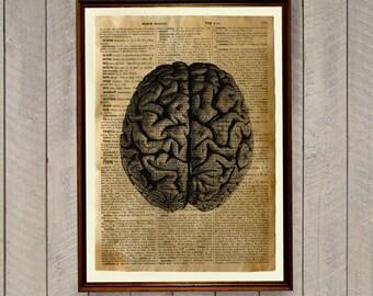 Anatomy poster Human brain print Medical decor Old dictionary WA10