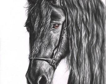 Friesian Horse - Fine Art Print 30x40 cm