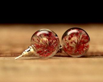 Genuine dill flowers stud earrings e106