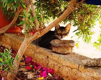 Cyprus Cat - Fine Art Photography - Digital photography download, instant download, cat photography, animal photography, Wall decor