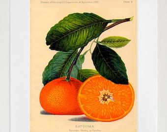 Food Art Oranges Kitchen Wall Decor