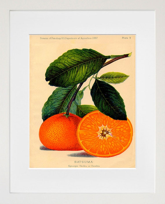 Food art oranges kitchen wall decor for Art of food decoration