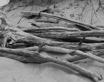 Driftwood on a sand dune.