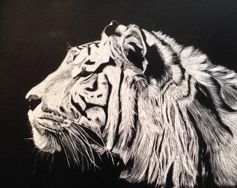 White Tiger Scratchboard