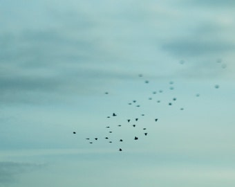 Bird Photography: black birds flocking across a blue sky, tilt shift, nursery decor, dreamy, whimsical nature, metallic 8x10 photo