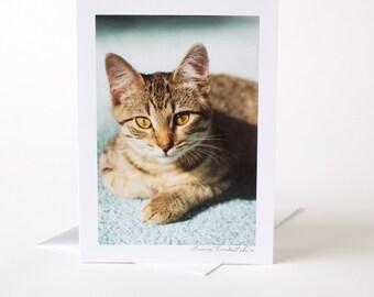 Photo Greeting Card, Blank Card, Photo Card, Cat, Kitten, Tabby,