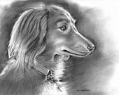 """Bella - Faithful reproduction of my Original Charcoal Drawing utilizing archival quality paper & inks, 9.75""""x14"""""""