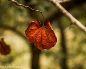 Autumn/Fall Single Red Orange Leaf Fine Art Photography Photo Print